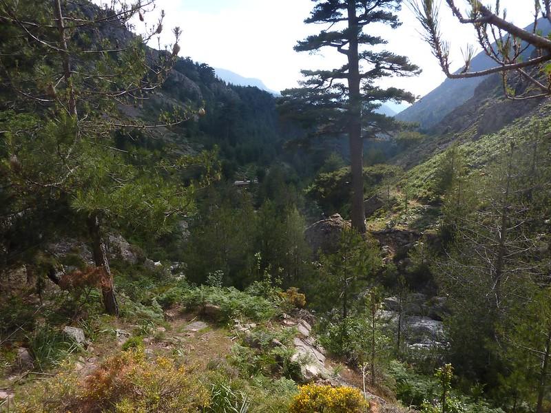 Environs du refuge de Puscaghja depuis l'amont de la Lonca