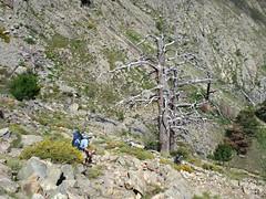 Sentier de la transhumance : descente sur Puscaghja après Bocca di Caprunale