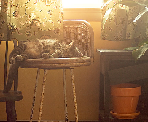 Sun Kitty