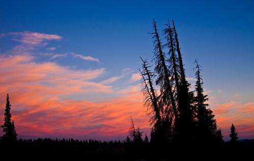 trees sunset utah uintas