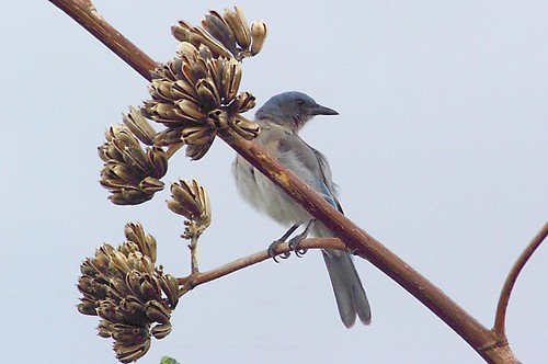 thewonderfulworldofbirds