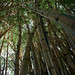 bamboos in the city by capetownnatural
