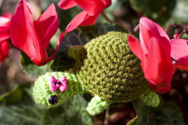 Free Amigurumi Patterns Bunny : Little miss turtle Flickr - Photo Sharing!