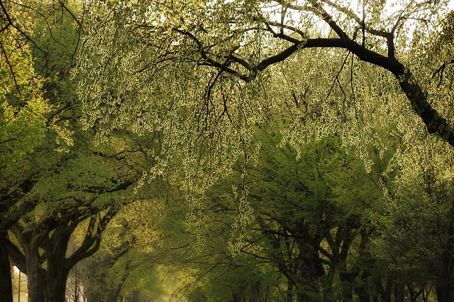 Backlit Trees w/ 28-300mm VR II
