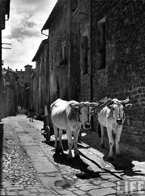 Ox cart in the Via Comune Vecchio, Assisi, Italy 1947, by Alfred Eisenstaedt