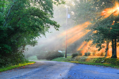 The Morning Mist and Rays