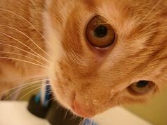 Kitty <3s Water