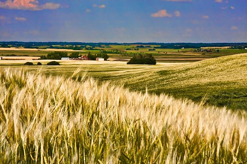 nature landscape outdoor alberta wheatfields