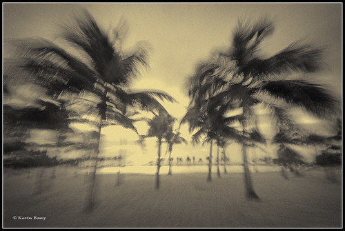 Coconut Palms at sunrise