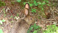 animal, hare, grass, rabbit, domestic rabbit, pet, fauna, rabits and hares, wildlife,