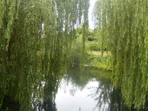 Willows at the millpond