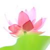 Photo:Lotus in the Sun / 蓮(ハス) By TANAKA Juuyoh (田中十洋)