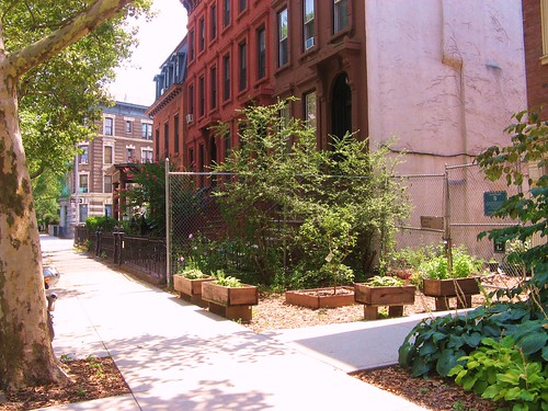 Greenest Block in Brooklyn Finalist