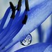 Raindrop    ( Explored ) by Henry der Mops