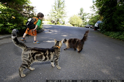 a boy and his cats, embarking on a blackberry picking walk