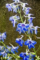 Blue @ Skogskyrkogården