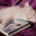 You can not look at a sleeping cat and feel tense by SaRa Meow  .. / @sosoMeow