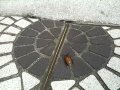 sidewalk, flagstone, cobblestone, road surface,