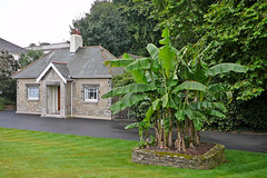 Kimberley Park, Falmouth: Lodge and banana tree