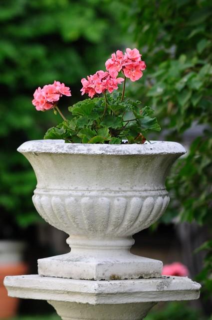 Flower pot w/AFS DX 55-300mm VR