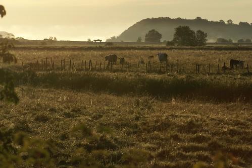 sunrise novascotia meadow pasture annapolisvalley morningdew kentville sonydslra100 frommobileme