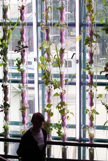 The Windowfarms Project / Britta Riley