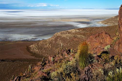 cactus white cacti plane view salt bolivia overlook whiteness salardeuyuni chuvica puertochuvica