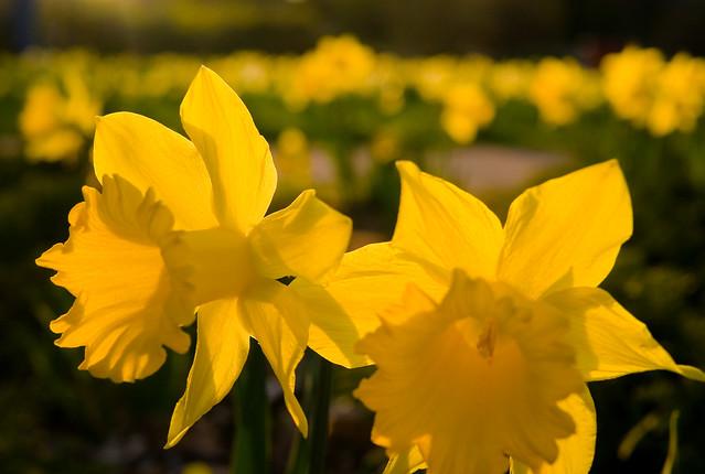 Springt Flowers