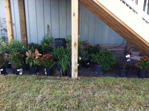 galveston_plants_ondeck