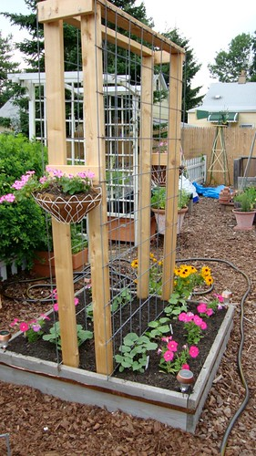 Built my first cattle panel arch trellis today for Vertical garden panels