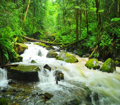 tree water creek forest riverrun floodrush