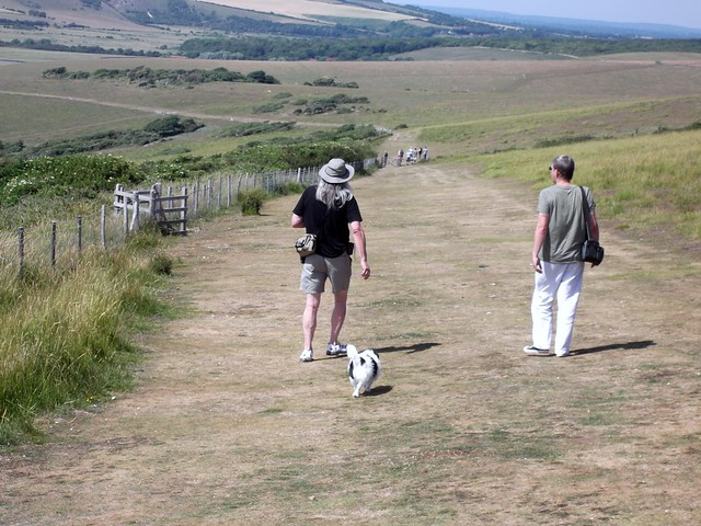 South Downs Dog Walks