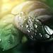 Shining droplets by aannda