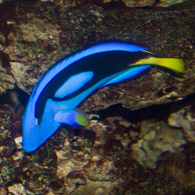 Bw655 Tropical Fish Trip To The Adventure Aquarium