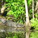 Alligator Canal DSCN3454