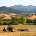 Tractor Plowing Near Calero Creek Trail
