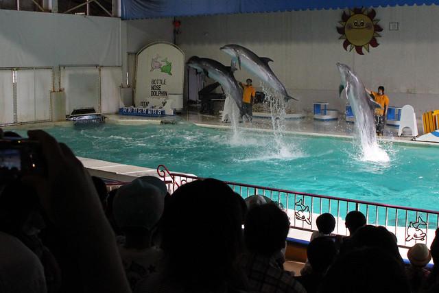 Photo:OTARU Aquarium - Dolphin show. By MIKI Yoshihito. (#mikiyoshihito)