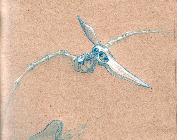 Pterodactyl skeleton | Flickr - Photo Sharing!