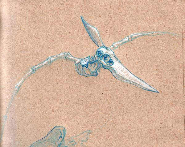 Pterodactyl skeleton | Flickr - Photo Sharing!