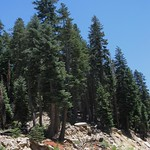 Sequoia NF, Sherman Pass Rd 3178a