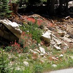 Sequoia NF, Sherman Pass Rd 3179a