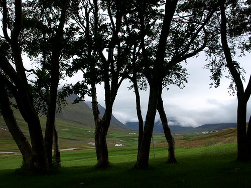 trees landscape iceland valley rowan eyjafjörður svarfaðardalur reynitré urðir