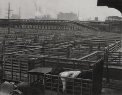 Stock Yards, Chicago, Illinois, 1926, by E.O. Hoppe