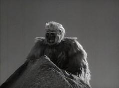 chimpanzee(0.0), fur clothing(0.0), great ape(0.0), gorilla(0.0), ape(0.0), fur(1.0),