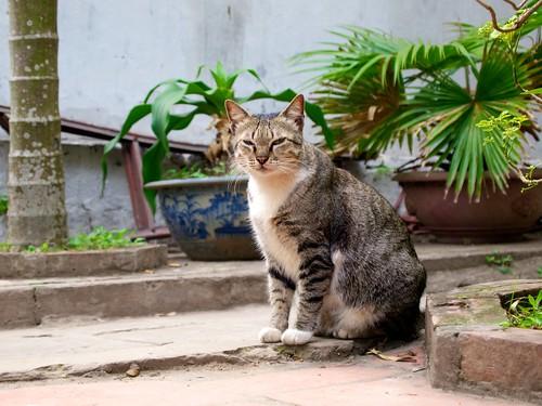 Cat near One Pillar Pagoda