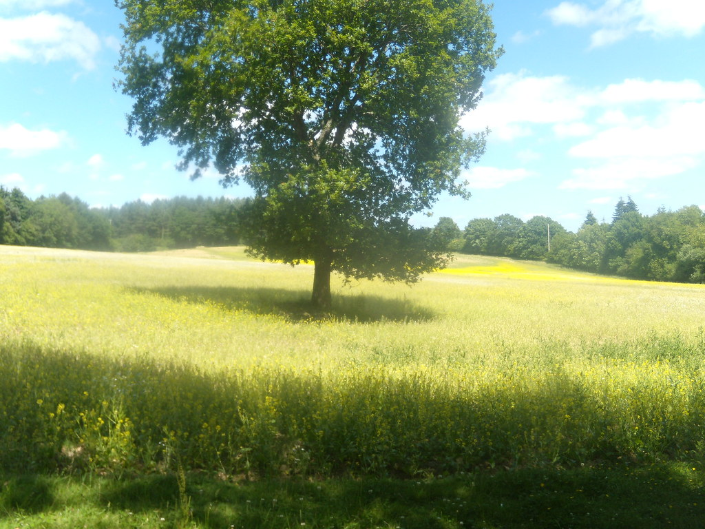 Tree in a field Battle Circular