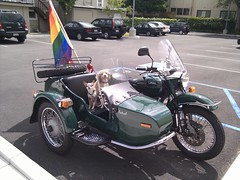 automobile, vehicle, motorcycle, sidecar, land vehicle, motor vehicle,