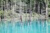 Photo:青い池 By speechlessson