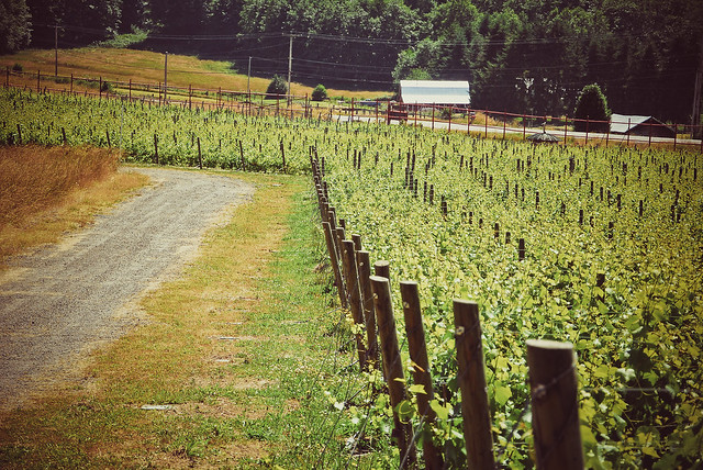 Veeyard Meaning: Vineyard Definition/meaning