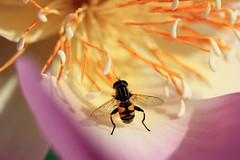 Bee / 蜂(はち)